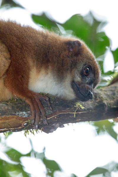 Madagascar_2013_FH0T0089.jpg