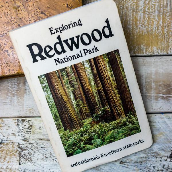 Exploring Redwood National Park