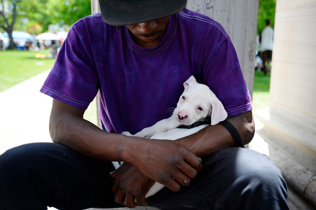 . Craig Williams finds a shady spot to sit and enjoy the music with his two-month-old pit bull, Goku, during the Denver 420 Rally held Saturday at Civic Center Park. (Photo by Kira Horvath/ The Denver Post)