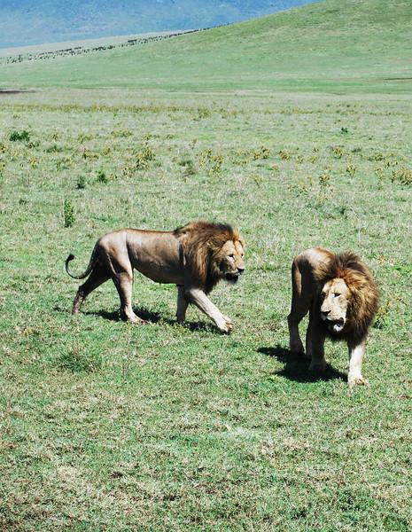 Ngorongoro (142).JPG