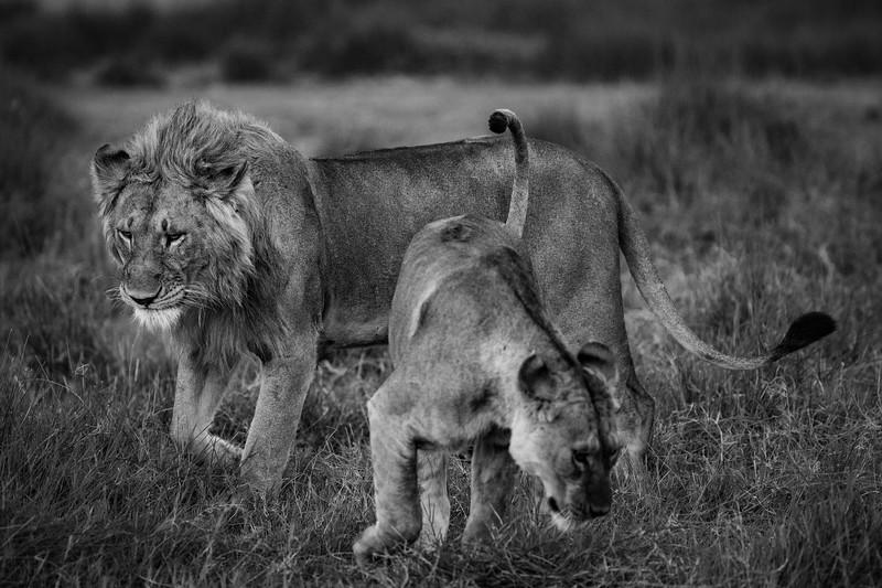 Tanzania_Feb_2018-221.jpg