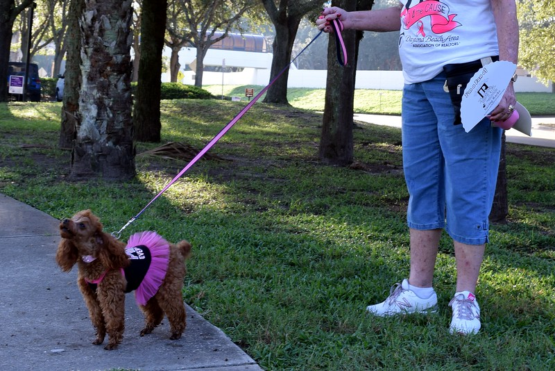 2016 Volusia Co Bark For Life (5).JPG