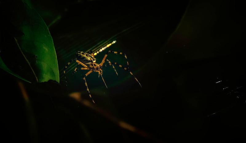 Spiders-Arachnids-134.jpg