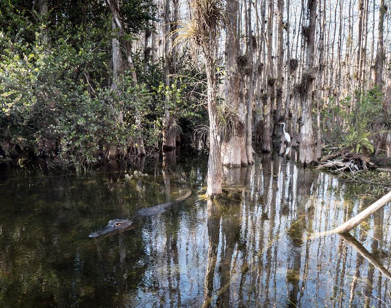 Everglades-100.jpg
