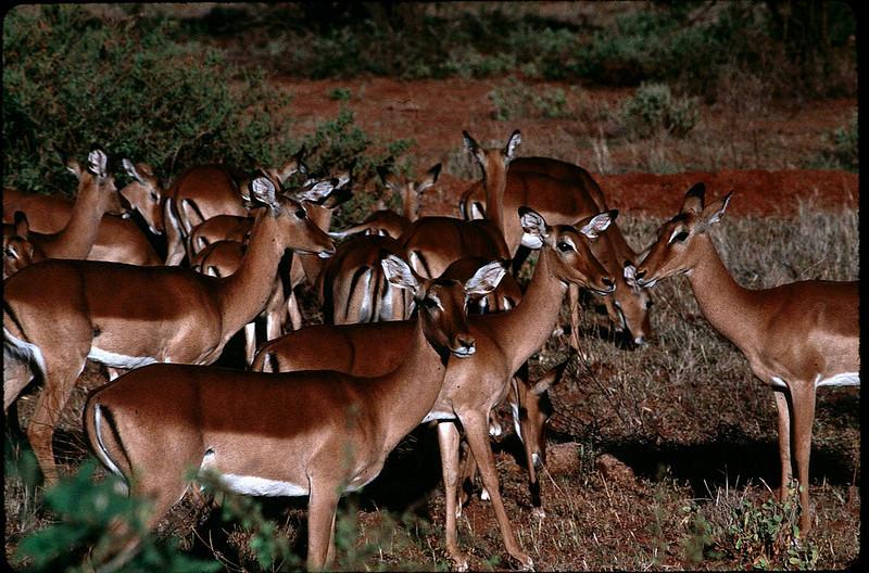 Kenya1_050.jpg