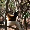 Madagascar 2017 (47)