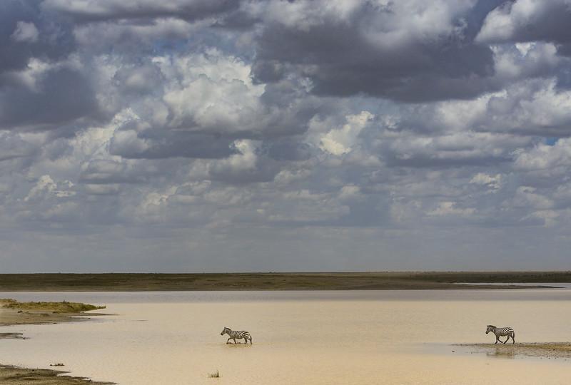 Zebras-storm-coming-Tanzania-1.jpg
