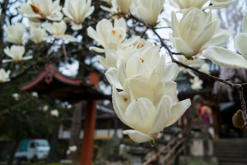 Nara Day 5 (81 of 374).jpg