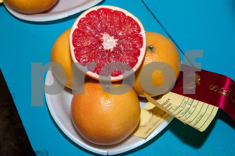 January 31, 2015 - Texas Citrus Fiesta - Citrus Exhibit_LG