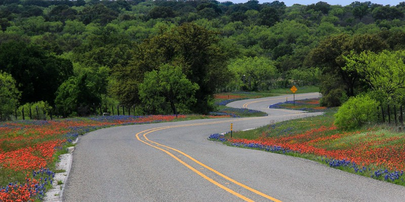 """Telephoto compression of a gradual """"S"""" curve. Some long road stretches had flowers on both sides for miles."""