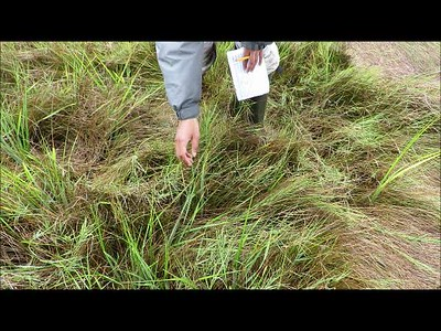 Salt marsh vulnerability survey at Wellfleet Bay