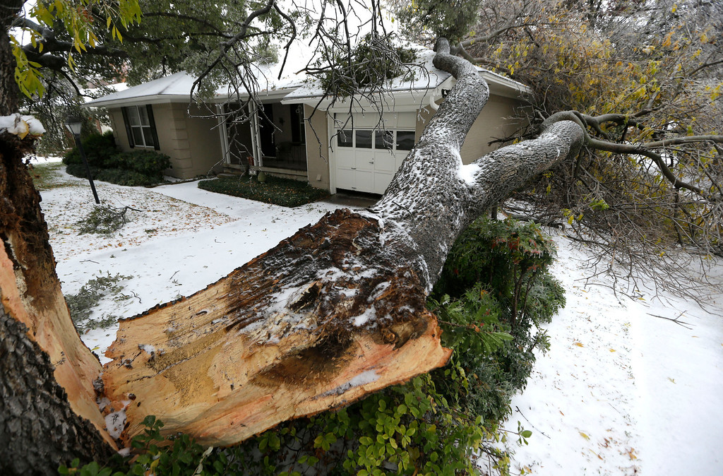 . A tree felled by ice rests near a house Friday, Dec. 6, 2013, in Richardson, Texas.  Winter storm and ice warnings are in effect through much of today for parts of six states in the Midwest, including Texas, Missouri, Illinois and Indiana. An ice storm in North Texas has knocked out power to more than a quarter of a million homes and business, canceled almost 1,000 flights and contributed to a fatal wreck. The National Weather Service issued a winter storm warning for the Dallas area until Friday night. (AP Photo/LM Otero)