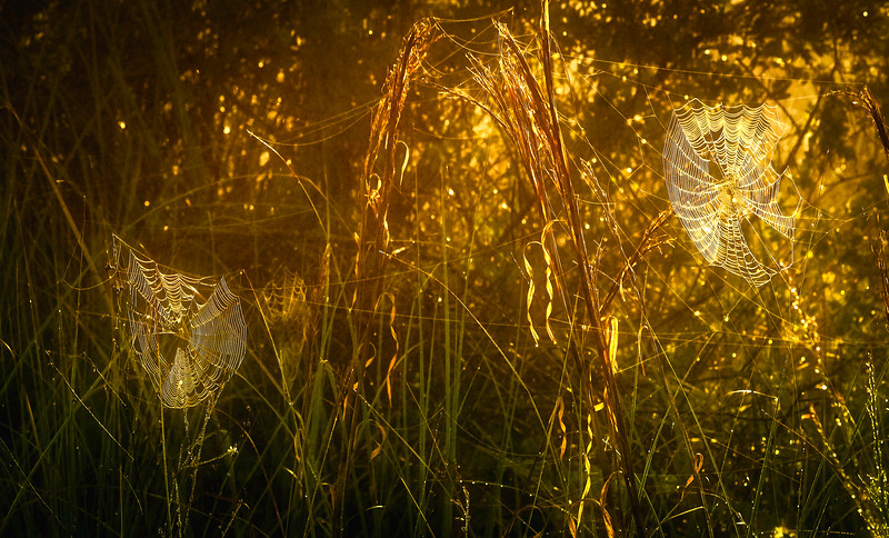 The Magic of Light-130.jpg