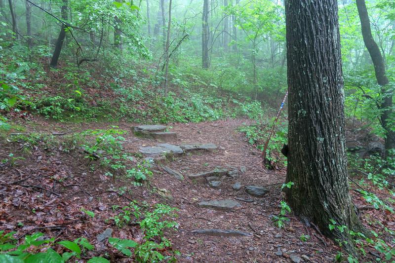 Barnett Branch/Mountains-to-Sea Trail Junction -- 3,800'