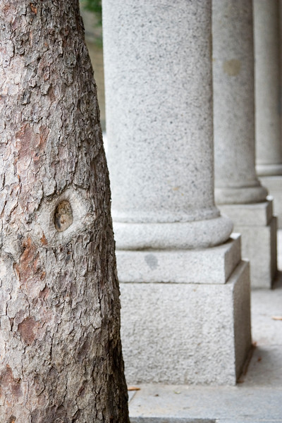 Abstract image of a trunk lined up with granite columns
