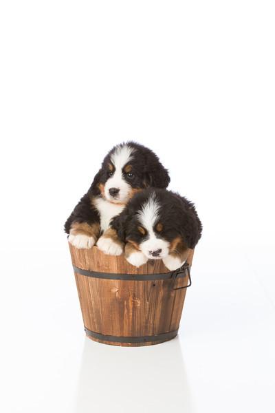 2013-Pearson Pups-Jun02-0455.jpg