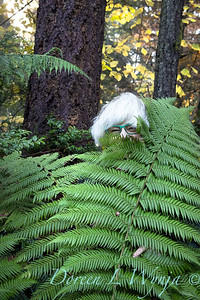 11-2020 Fern wrapping for winter