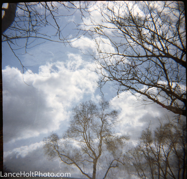 Scan20004 cloudy trees.jpg