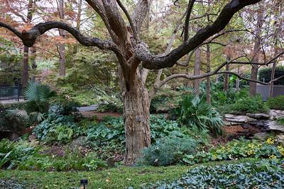 2020 Dallas Arboretum - November