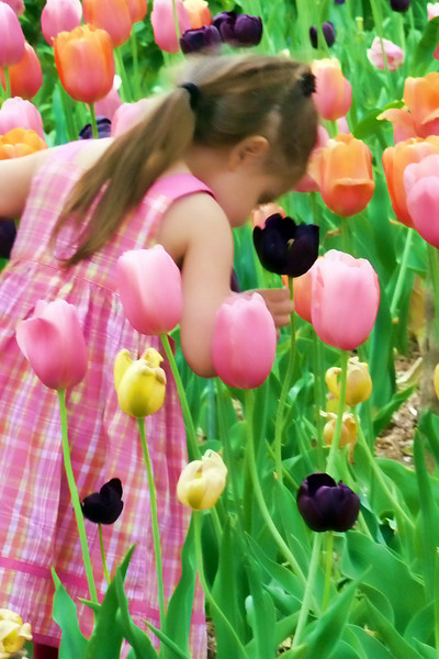 Little girl smelling the tulips.jpg