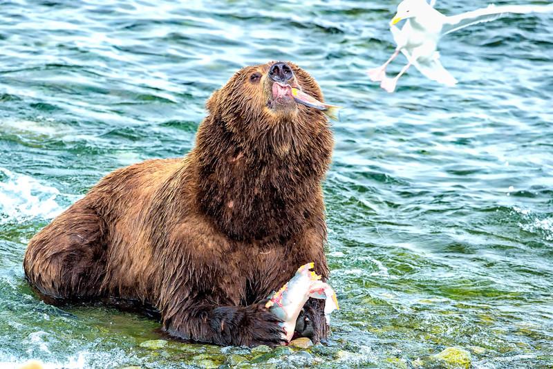 Alaska_2014_FH0T7756.jpg