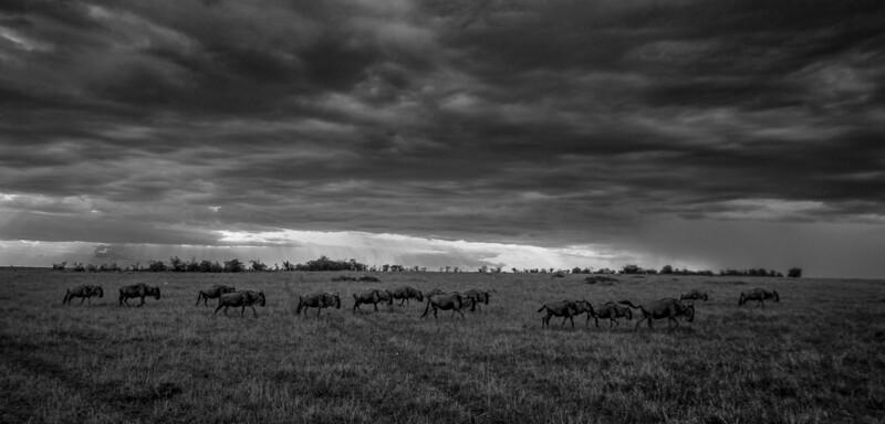 Kenya-102013-168.jpg