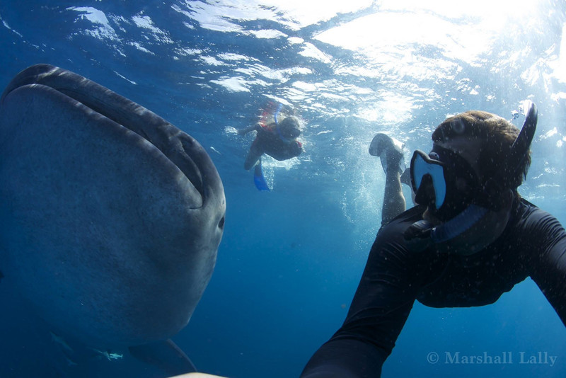 Marshall Lally photo:  selfie with Juliet and whale shark