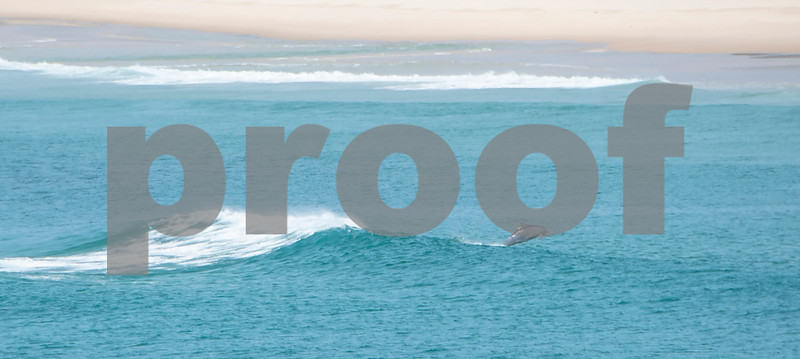 seal rocks dolphin 1.JPG