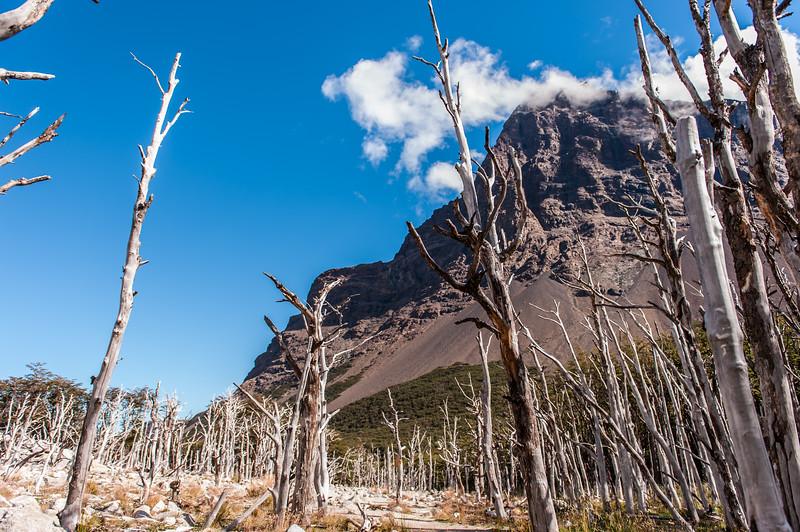 46 - Torres del Paine - February '13.jpg