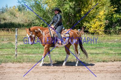 Colorado Stock Horse Sept. 18th 2016