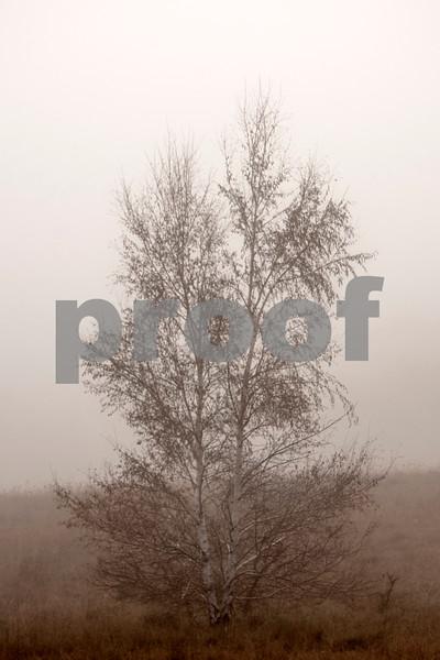 foggy trees 3.jpg