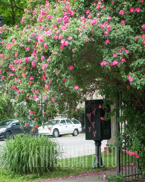 pinkheartflowertree.jpg