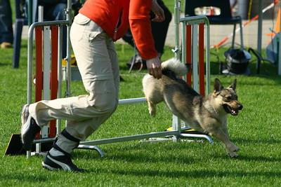 16 april 2009 Ronja - Onderlinge agility-wedstrijd KC Delft