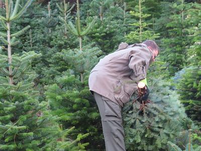 Hauling Trees - Nov 21
