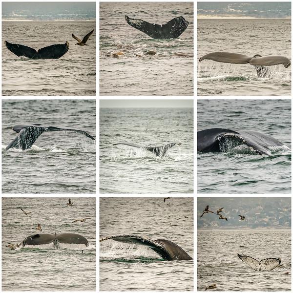 WhaleTails-comp.jpg