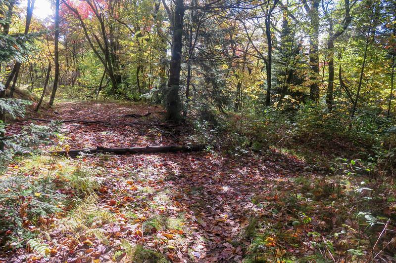 Little East Fork Trail -- 5,360'