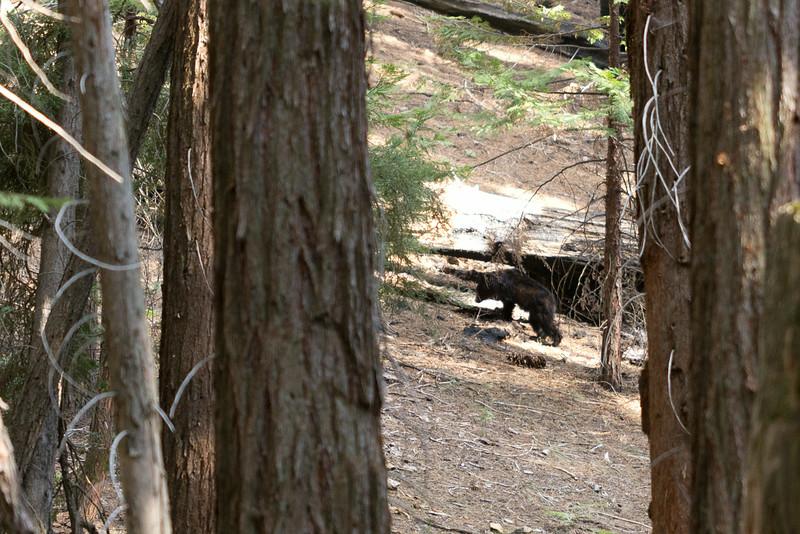 Sequoia_0648.jpg