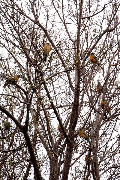 Backyard_Birds-06.jpg