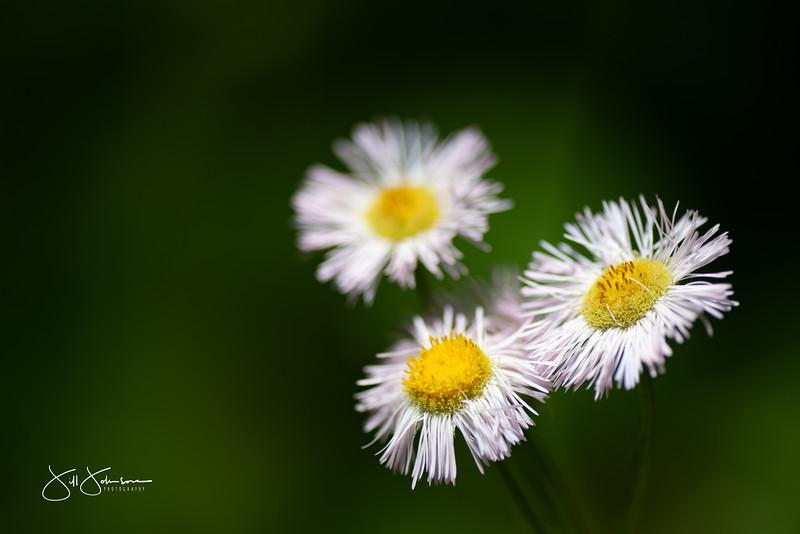 flowers-023.jpg