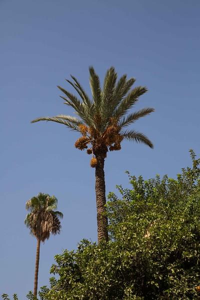 160927-060933-Morocco-1016.jpg