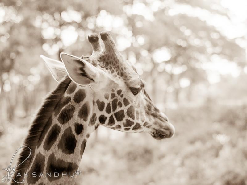 Safari-Africans-130.jpg
