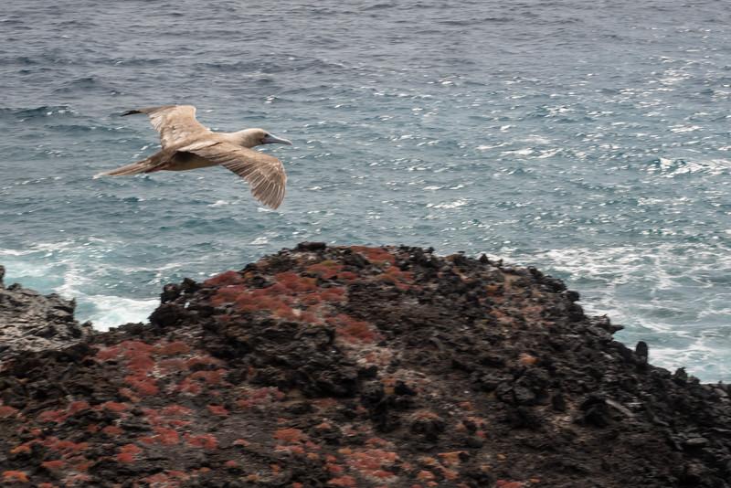 Galapagos-Best-183.jpg
