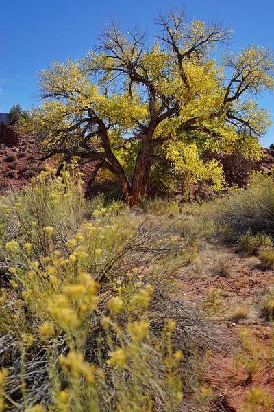 Fall colors; Mary Jane Canyon, Utah