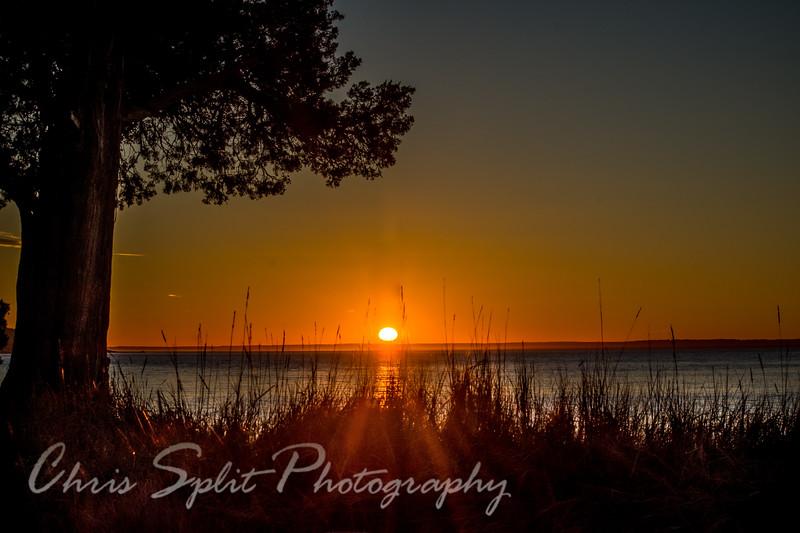 sunset hdr tree grass (1 of 1).jpg