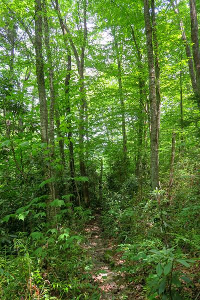 Greasy Cove Trail -- 4,180'