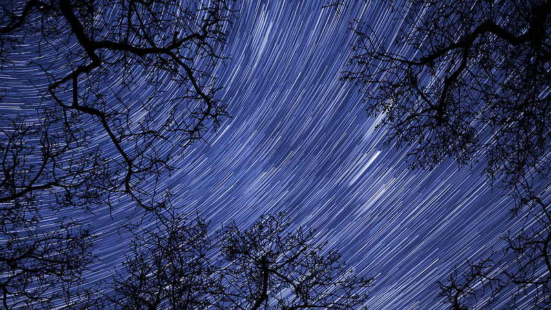 4k-uhd-night-sky-stars-between-trees-time-lapse-star-trail-10939_4jjgytkq__F0011.png