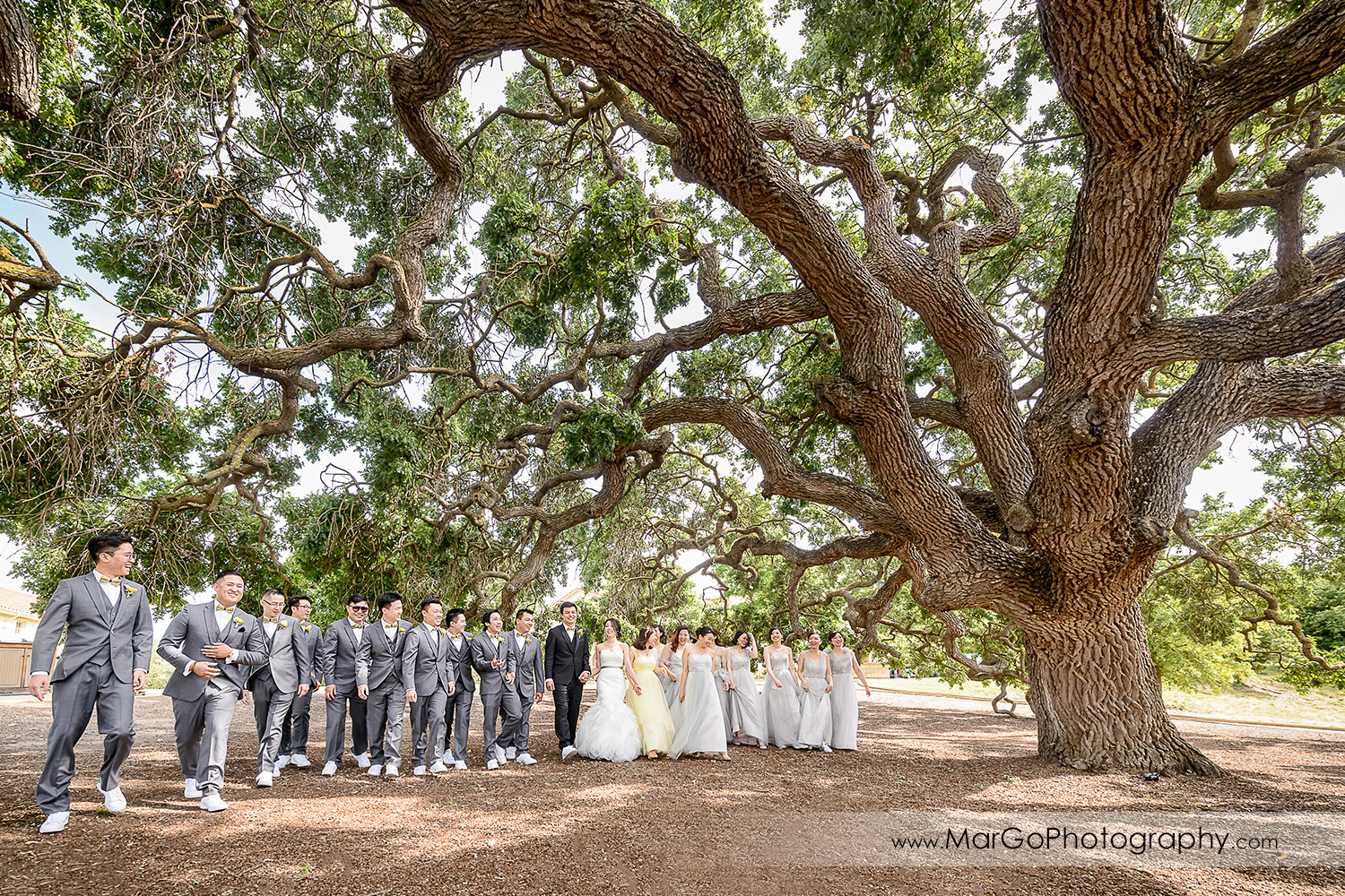 bridal party walking under the tree at the Club at Ruby Hill in Pleasanton