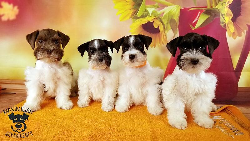 Julie Puppies 015.jpg