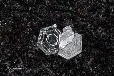 snowflakes-1581.jpg