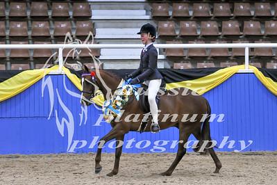 Class 11 Childs Lrg Show Pony